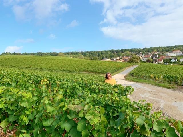 fietsen door de wijnvelden hautvillers