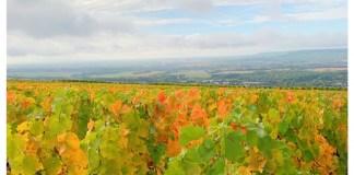 wijngaarden champagne streek mutigny