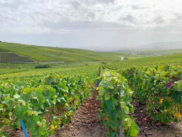 wijnvelden mutigny