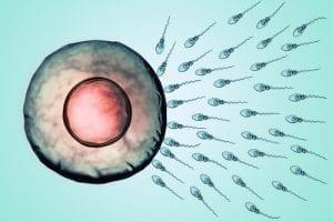 zwangerschapskalender week 1,2 en 3