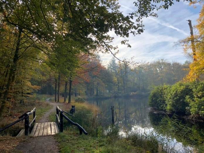 Koepelbos Friesland
