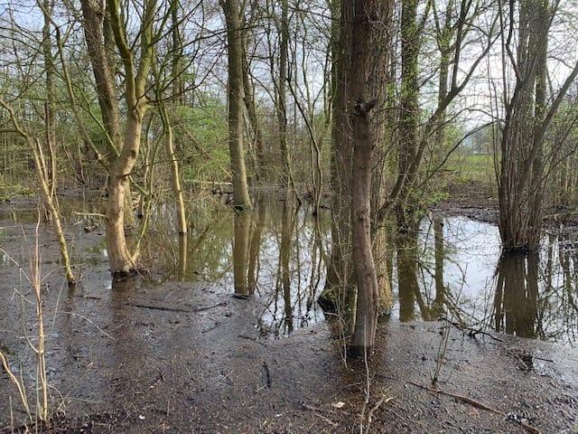 wandelen met yuren bomen in water