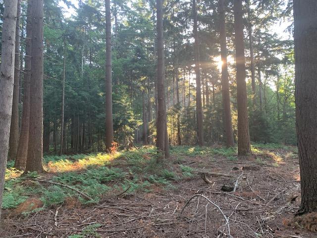 bos landgoed de slotplaats