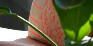 kussen plant
