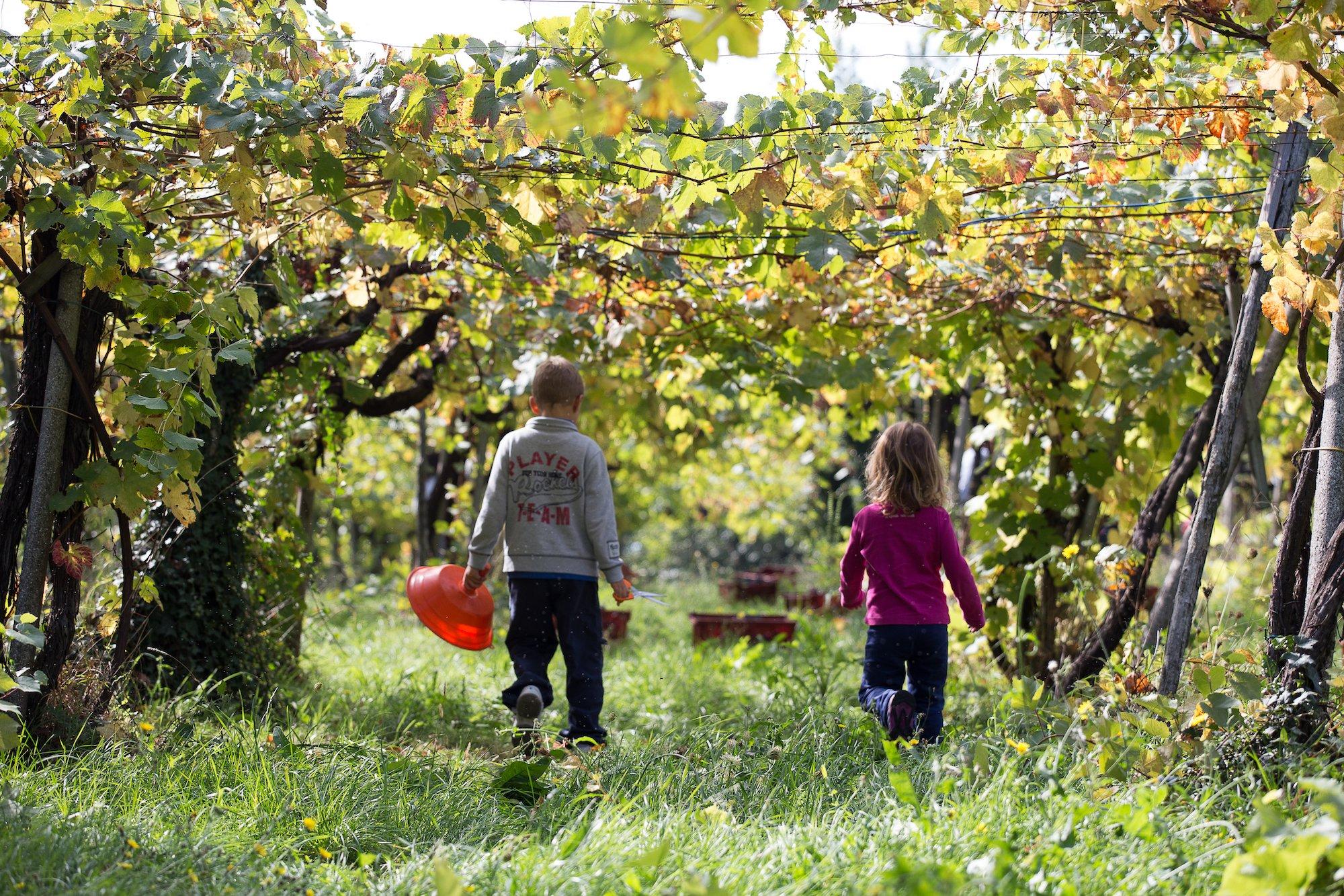 Strada del Vino Cesanese