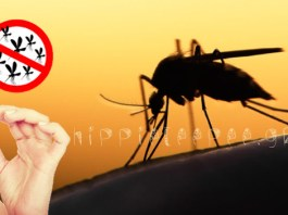 Πάρτε αυτή τη βιταμίνη και θα απαλλαγείτε από τα κουνούπια για όλο το καλοκαίρι!