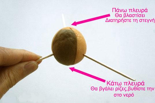 pos-na-kaliergisete-avokanto-2