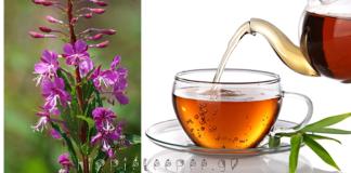 Επιλόβιο: Το Άγνωστο Βότανο που Θεραπεύει τον Προστάτη και άλλες Παθήσεις Ουροποιητικού συστήματος
