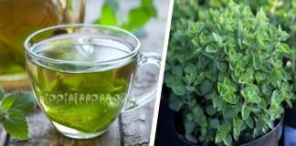 Τσάι Ρίγανης: Ποιες Ασθένειες Θεραπεύει; Μάθετε για τις Αντικαρκινικές και Αντισηπτικές του ιδιότητες