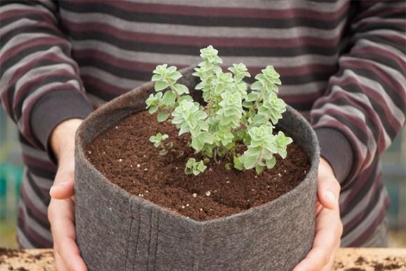 10 λόγοι για να φυτέψεις ρίγανη στη γλάστρα!