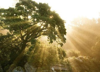 H θεραπευτική ενέργεια των δέντρων