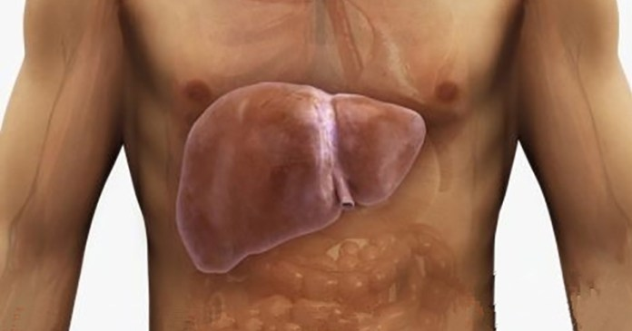 Λιπώδες Ήπαρ- Πως να το Αναστρέψετε με Φυσικό Τρόπο
