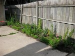 cement driveway with fence and plants