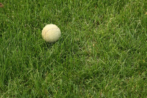 tennis ball in grassy lawn