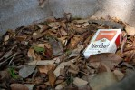 marlboro box in leaves