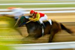 race horse with background blurred to show speed