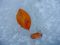 close up of an orange leaf on shimmery ice, maybe a frozen puddle