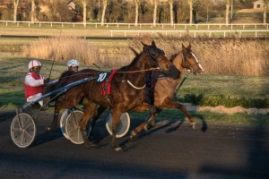 COURSES - Hippodromme_Bel_Air_24_2_2020_COURSES_39