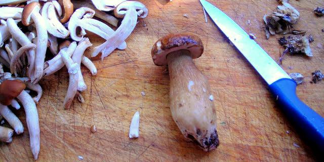 mushroom_cleaning