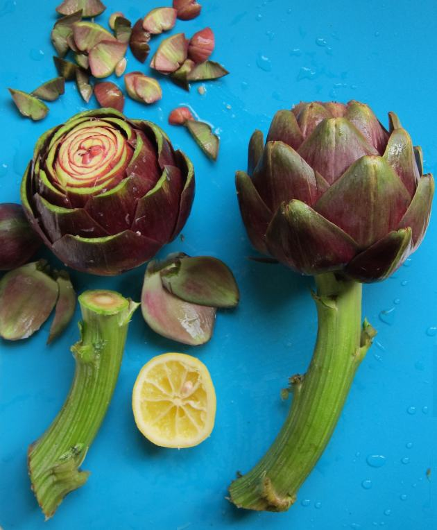 Trimming artichokes for steaming in the pressure cooker