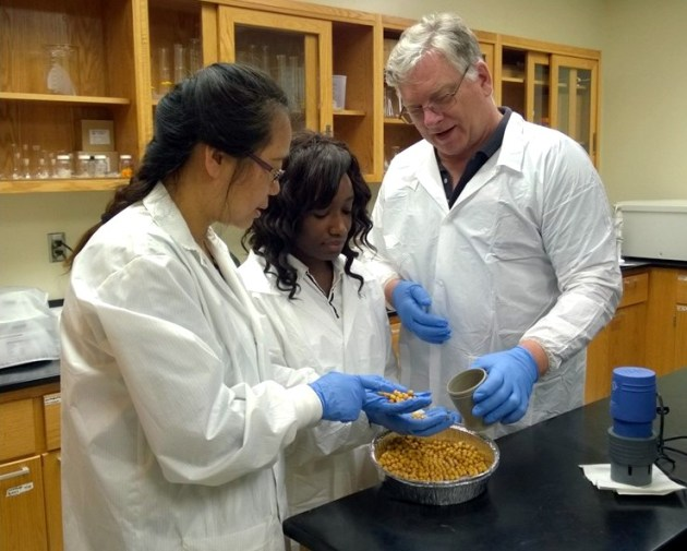Dr. Yixiang Xu, Ms. Mary Obielodan andDr. Edward Sismour check chickpeas in their laboratory at