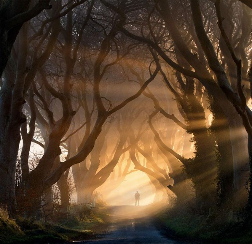 Terowongan Dark Hedges