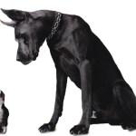K CAMP – Big Dawg Status ft True Story Gee & Rare Sound (Audio)