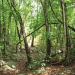 Dry Mixed Evergreen Forest, Mihinthale