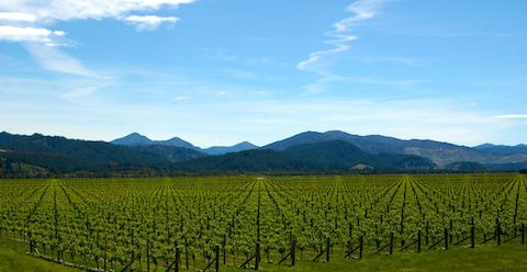 Ara Vineyards, a spectacular corner of Marlborough