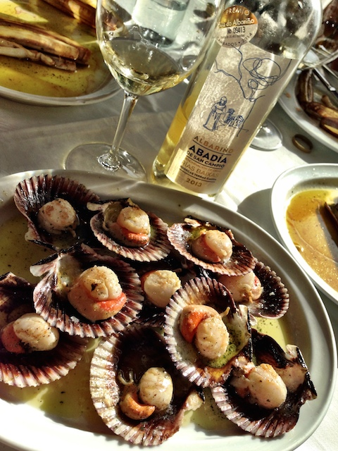swimming scallops and Abadia
