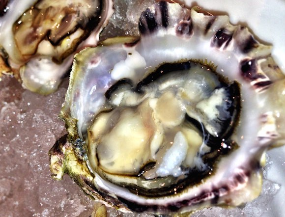 The Black Pearl Oyster —a perfect, plump and juicy partner