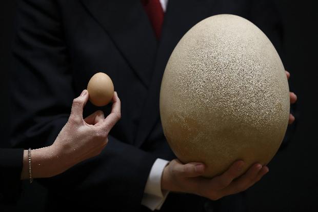 Most közölték a tudósok: hátborzongató, amit a tojásban találtak