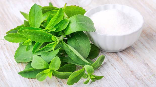 Stevia, kép - Hirmagazin.eu