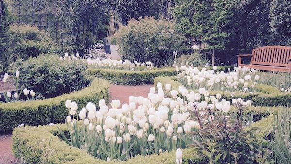 秘密の花園 ザ・シークレット・ガーデン