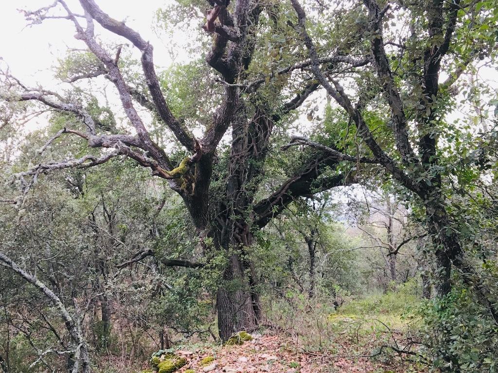 古代ローマの森、南仏プロヴァンス