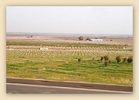 Lindsay, farming, farm, landscape, country side, plantation