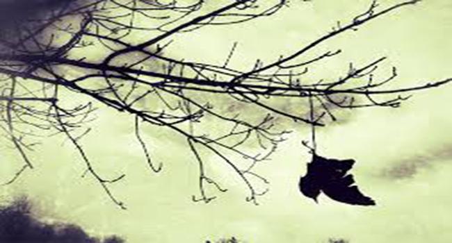 pohon-ranting.jpg