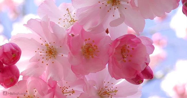 bunga-pink.jpg