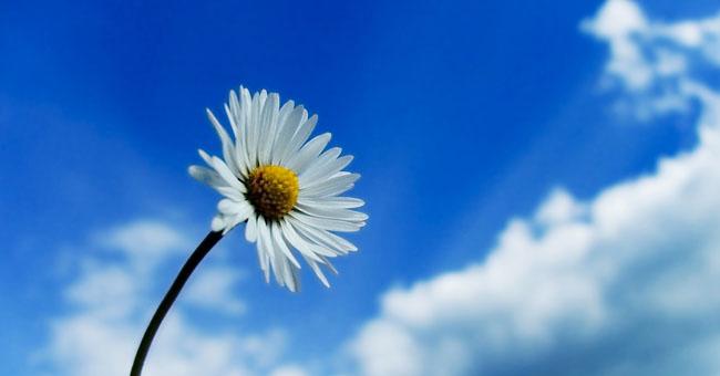 bunga-putih.jpg