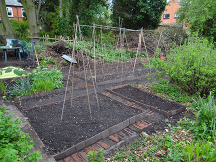 cleared beds and red brick paths on our allotment