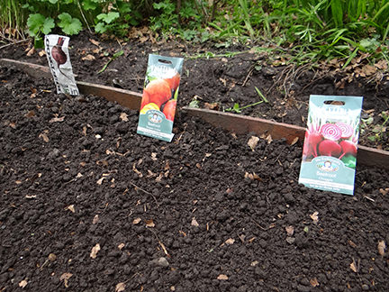 planting 3 types of beetroot