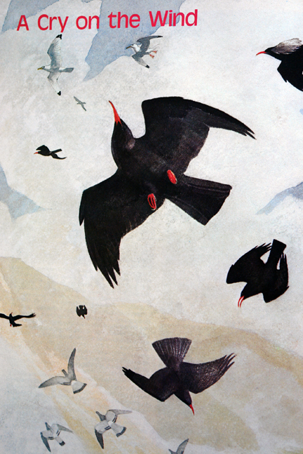 illustration of choughs from a vintage 1970s RSPB magazine