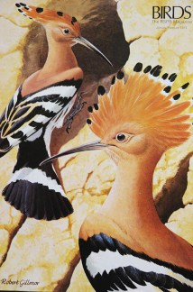 illustration of a pair of hoopoes from a vintage 1970s RSPB magazine