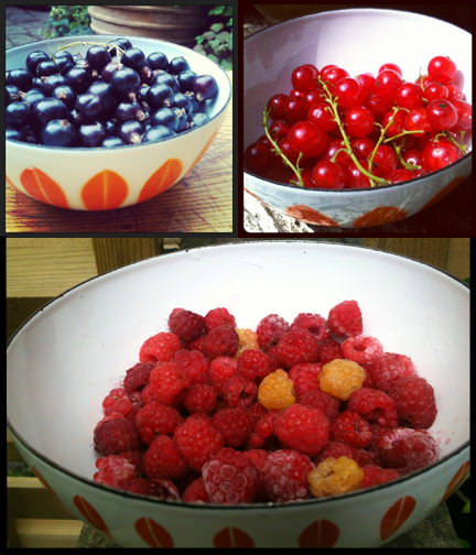 tryptic of bowls of blackcurrants, redcurrants and wild raspberries