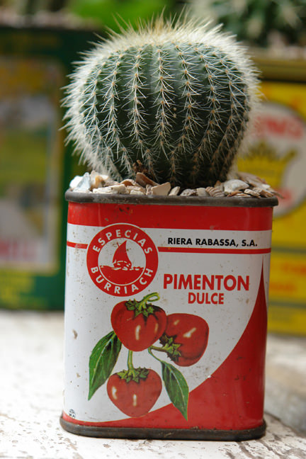 cactus planted in a pimenton dulce tin