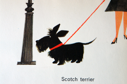 "illustration of a Scottish terrier from vintage book, ""This is Edinburgh"" by Miroslav Sasek"