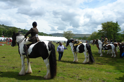 horses on display at the Todmorden Agricultural Show