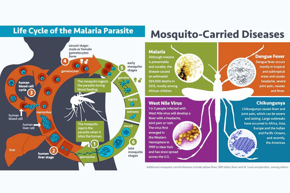 旅行中のマラリア | HiSoUR 芸術...