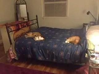Tres gatas.