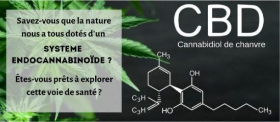 Connaissez-vous les vertus thérapeutiques du cannabidiol (CBD) de chanvre ?